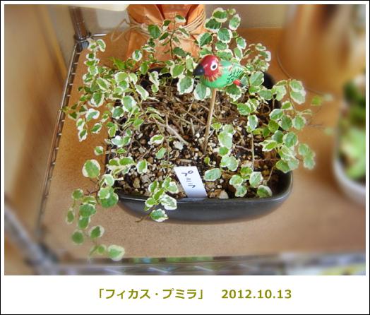 Dsc00414_5